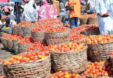 Tomato sellers blame lack of irrigation, others, for price increase in Kwara